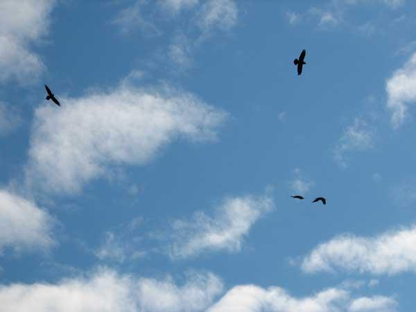 4 Ravens